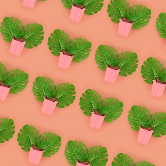 Tropische palmmonsterablätter liegen in den eimern eines pastells auf einem farbigen hintergrund
