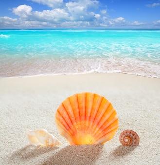 Tropische perfekte sommerferien der strandsandschale