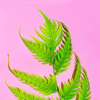 Tropische pflanze auf rosa. sammlung. stilvolles minimalistisches design