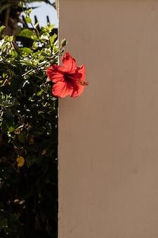 Tropische pflanze mit roter blume auf beige wand des hausbaus