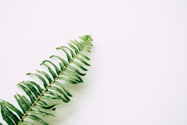 Tropische pflanzen auf weiß