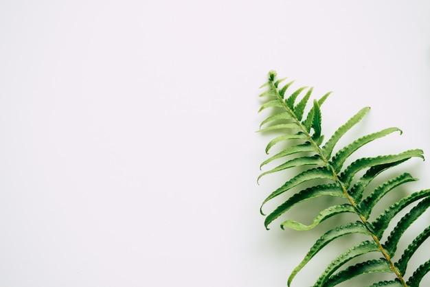 Tropische pflanzen auf weißem hintergrund