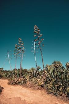 Tropische pflanzen und bäume gegen den blauen himmel