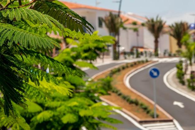 Tropische pflanzenblätter mit unscharfem hintergrund