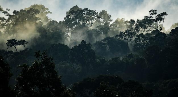 Tropische regenwaldlandschaft, landschaftlich reizvoller wald mit dschungelbaum in grüner natur, schöne wilde holzlaubpflanze über dem berg, blatt mit regenwasser, umweltparkhintergrund für reisen
