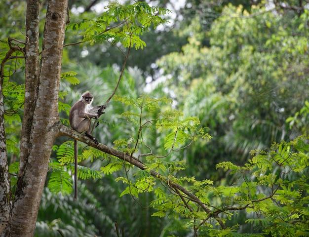 Tropische regenwaldlandschaft mit dem affen, der auf einem baum sitzt