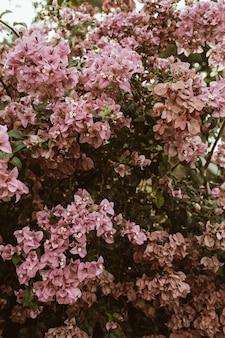 Tropische schöne blassrosa blumen, die auf großem üppigem blühen
