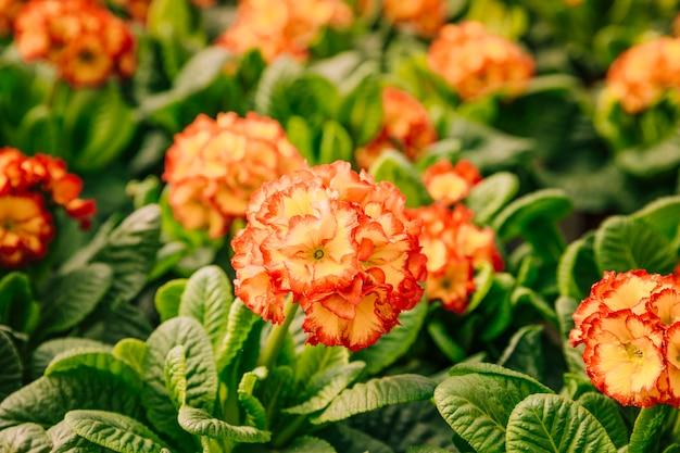 Tropische schöne blumen in voller blüte