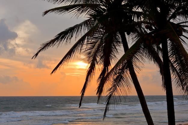 Tropische sonnenuntergangsszene mit palmen