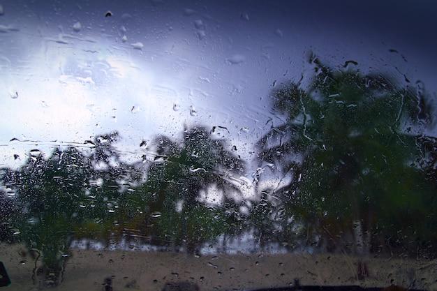 Tropische sturmpalmen des hurrikans aus auto heraus