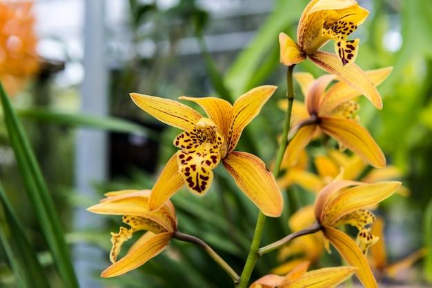 Tropische wilde orchidee