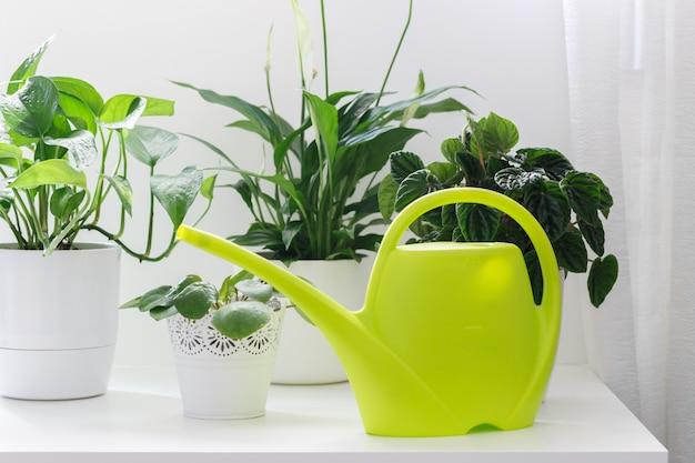 Tropische zimmerpflanzen