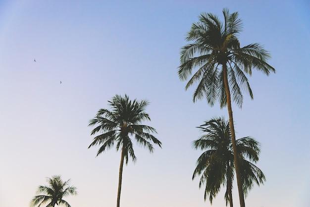 Tropischen filter paradies insel angeles