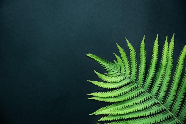 Tropischer abstrakter hintergrund. schönes farnblatt nah oben. draufsicht, kopierraum