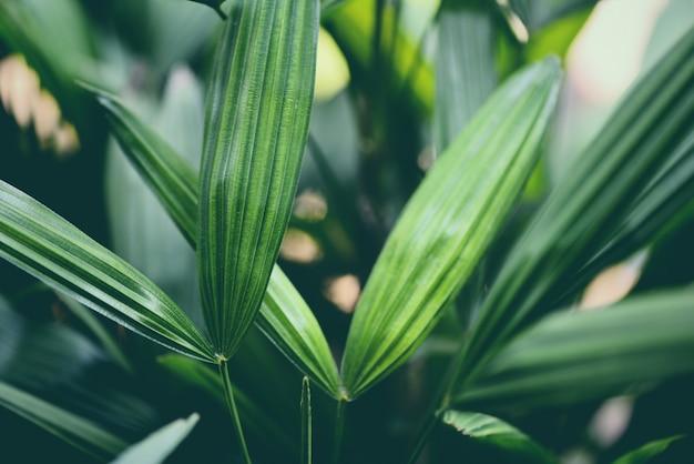 Tropischer anlagenabschluß der palmblätter herauf grünes blatt im dschungellaub