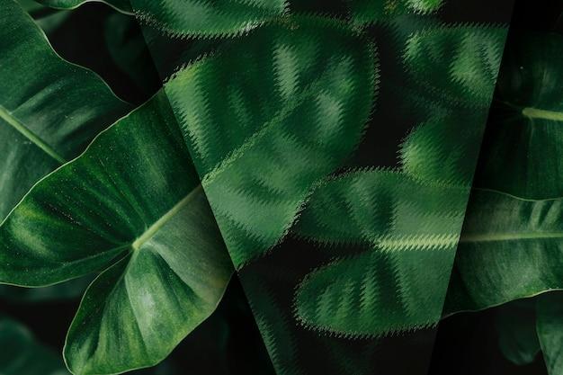 Tropischer anthurium verlässt strukturierten hintergrund