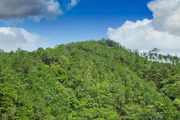 Tropischer asiatischer grüner gebirgshügel völlig mit waldbaumlandschaft mit blauem himmel.
