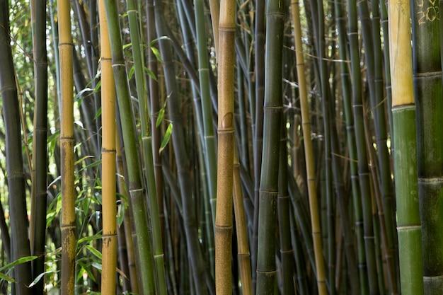 Tropischer bambuswald bei tageslicht