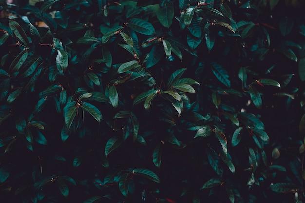 Tropischer baum im park tropischer farbfilter