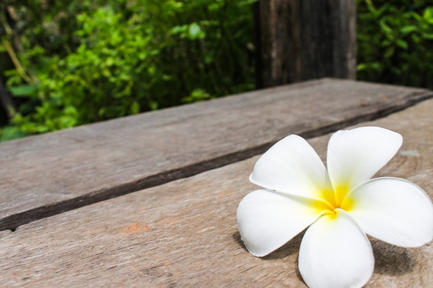 Tropischer blumen frangipani auf holz