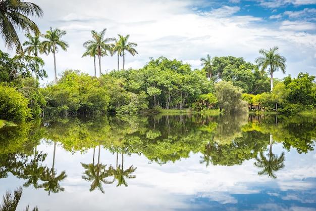 Tropischer botanischer garten fairchild, miami, fl, usa