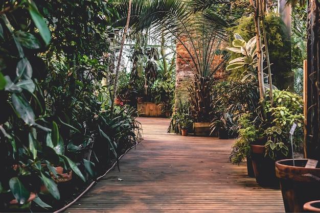 Tropischer botanischer garten im inneren mit einer vielzahl von exotischen bäumen