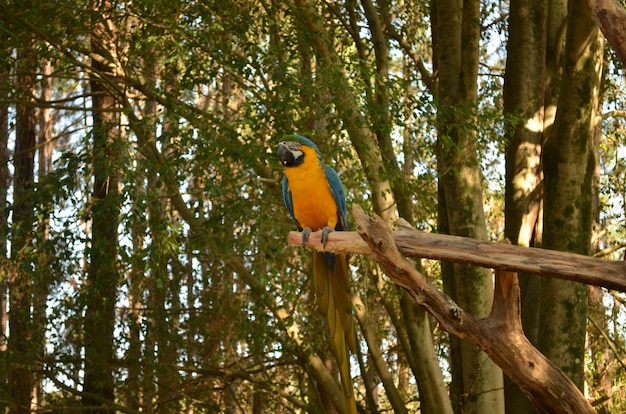 Tropischer brasilianischer vogel (arara)