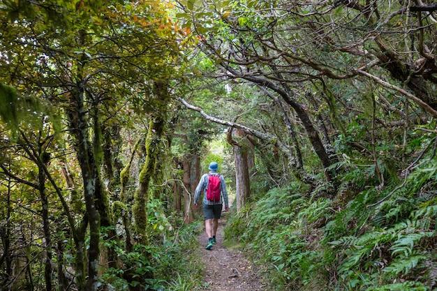 Tropischer dschungelwald neuseelands.