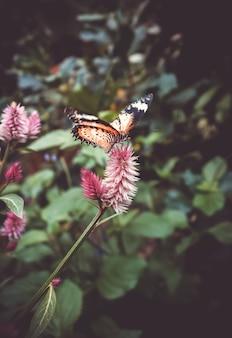 Tropischer monarchfalter auf einem blatt im regenwald