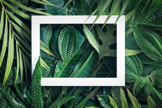 Tropischer naturhintergrund, abstrakter weißer rahmen in den blättern mit kopienraum, draufsicht