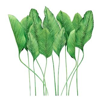 Tropischer naturhintergrund des aquarells mit hand gezeichneten palmblättern.
