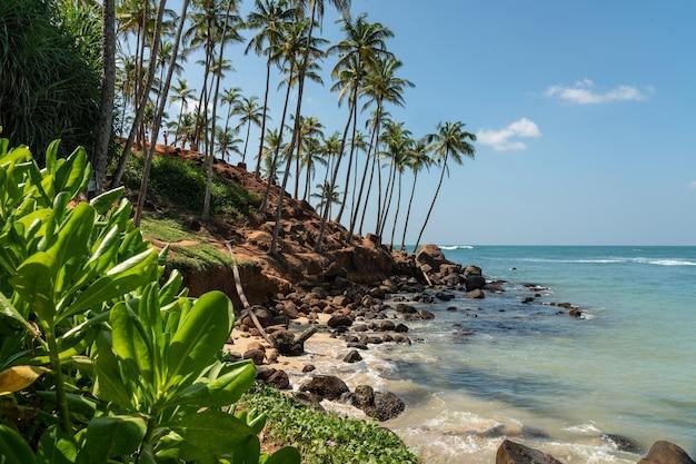 Tropischer ozeanstrand mit palmen, mirissa