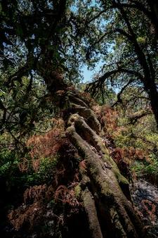 Tropischer regenwald, grüne dschungellandschaft