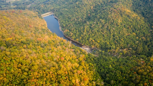 Tropischer regenwald in den herbstfarben und in der luftansicht der natürlichen dammsaison