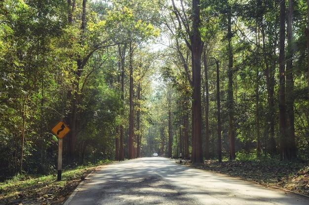 Tropischer regenwald mit sonnenlicht auf asphaltstraße