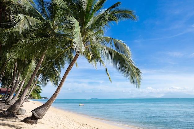 Tropischer sandstrand mit kokosnussbäumen am morgen. thailand, insel samui, maenam.