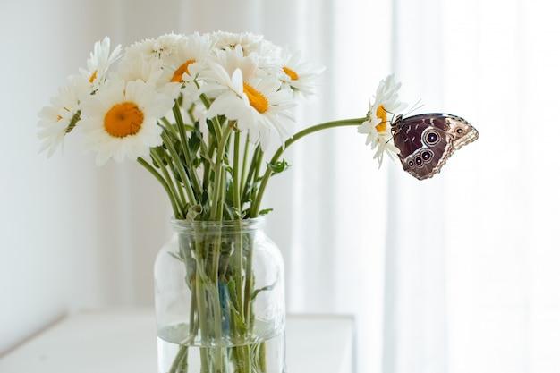 Tropischer schmetterling morpho sitzt auf einer weißen blume in einem blumenstrauß von großen gänseblümchen und von gerberas