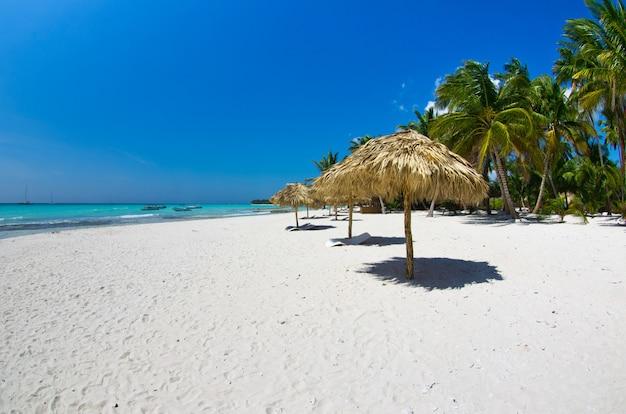 Tropischer strand am sonnigen tag