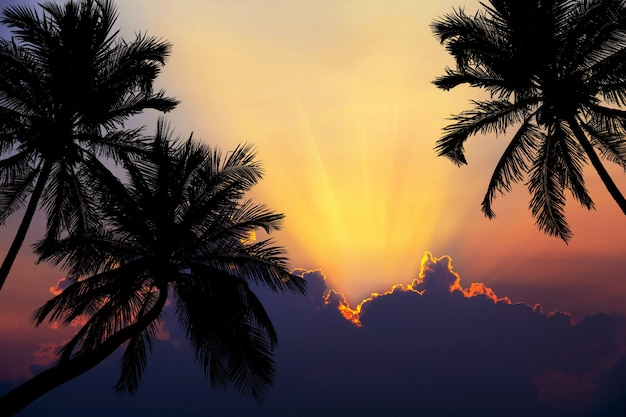 Tropischer strand auf sonnenuntergang mit schattenbildpalmen.