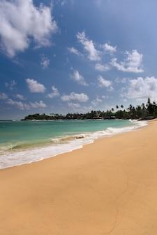 Tropischer strand mit bäumen
