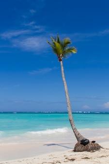 Tropischer strand mit palme