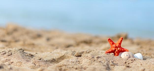 Tropischer strand mit seestern auf sand, sommerferienhintergrund. reise- und strandurlaub, freier platz für text.