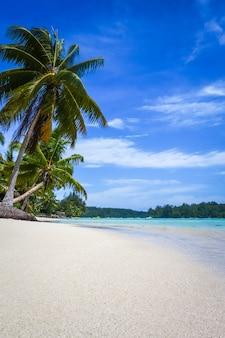 Tropischer strand und lagune des paradieses in moorea island. französisch polynesien