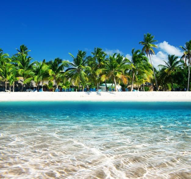 Tropischer strand