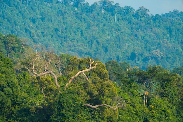 Tropischer tiefer regenwald, schichten von baumkronen und bergen, freiheit und spa-konzept