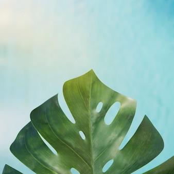 Tropischer urlaub mit pool-hintergrund