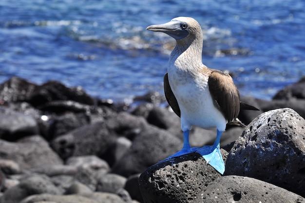 Tropischer vogel in der natürlichen umwelt