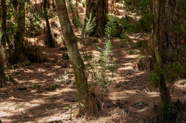 Tropischer wald mit getrockneter vegetation