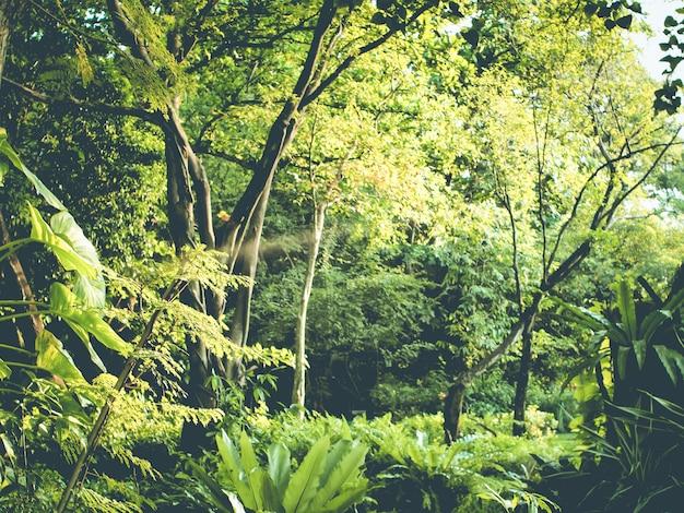 Tropischer waldgrün perfekter naturbereich hat viele große blumenpflanzen in thailand in südostasien.