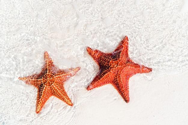 Tropischer weißer sand mit roten seesternen im klaren wasser